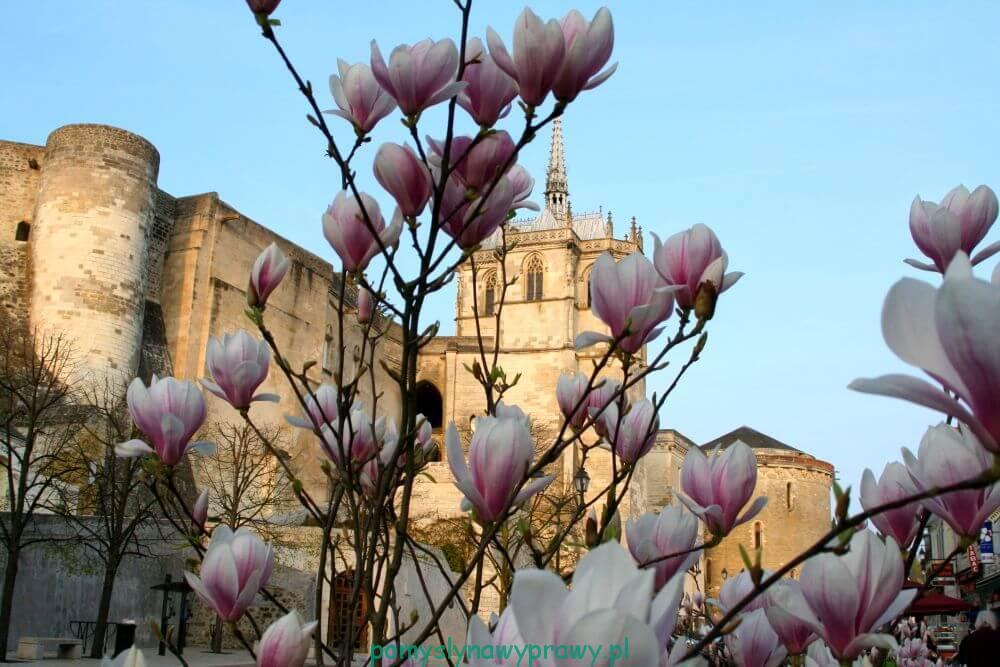 Francja Zamki nad Loarą Amboise