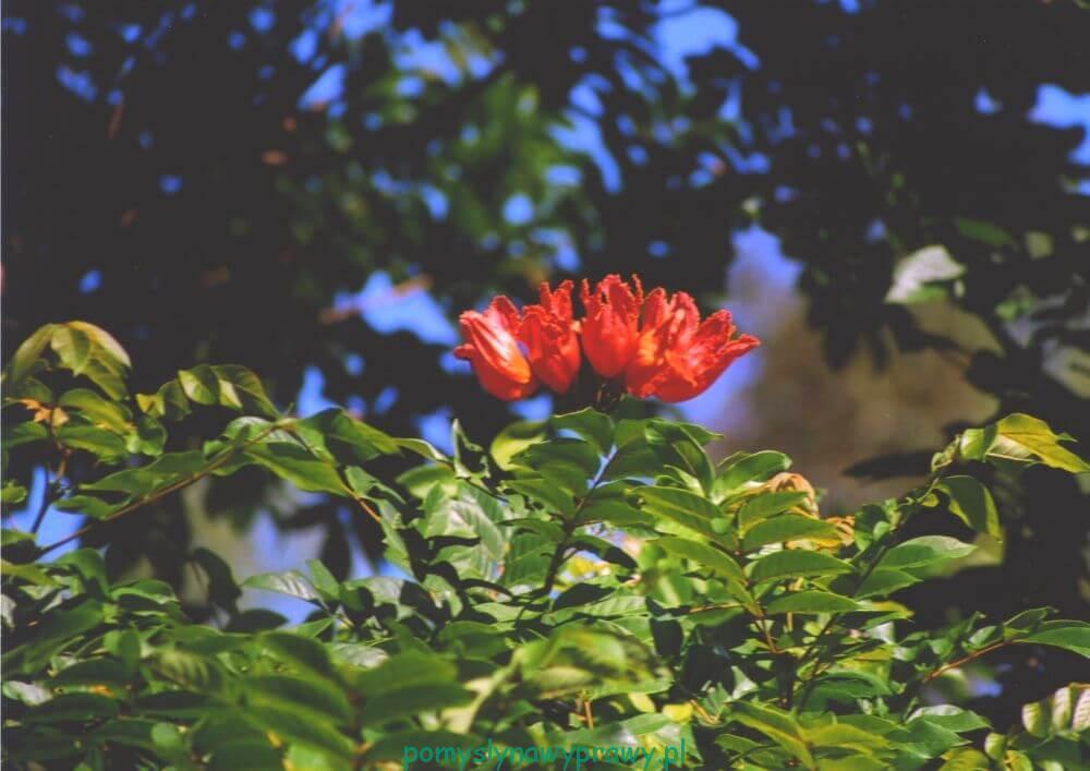 Dominikana roślinność