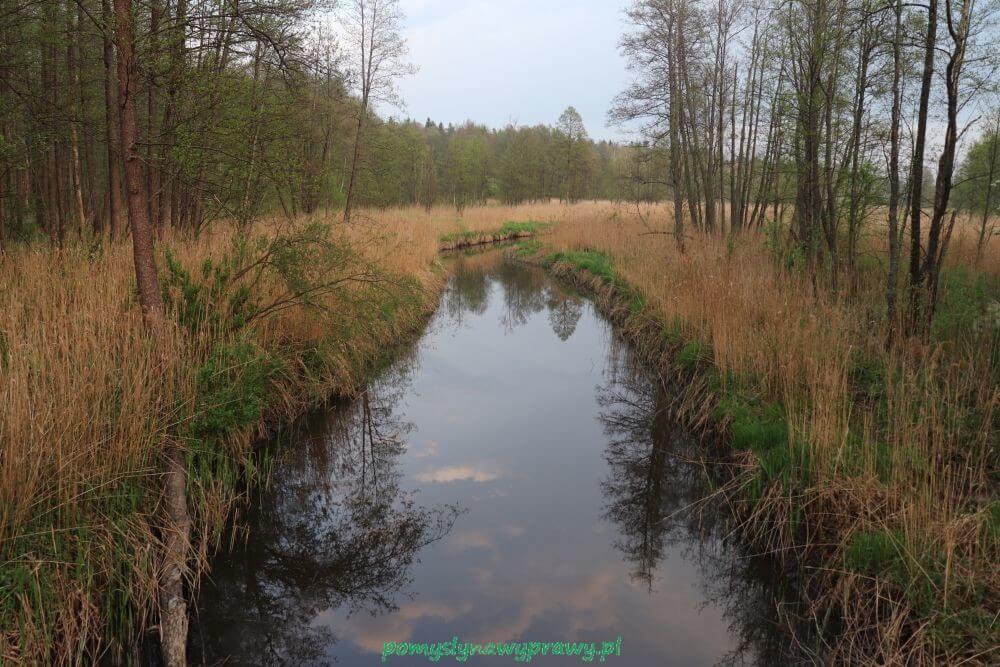Podlasie Białowieża Puszcza Białowieska Rezerwat Wysokie Bagno rzeka Narewka