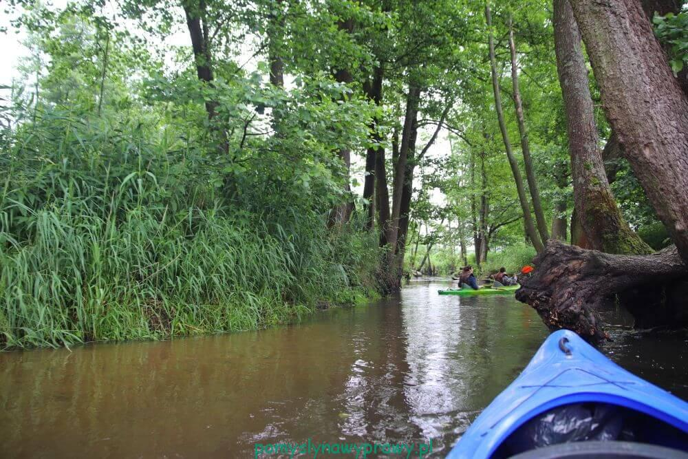 spływ rzeką Wieprz