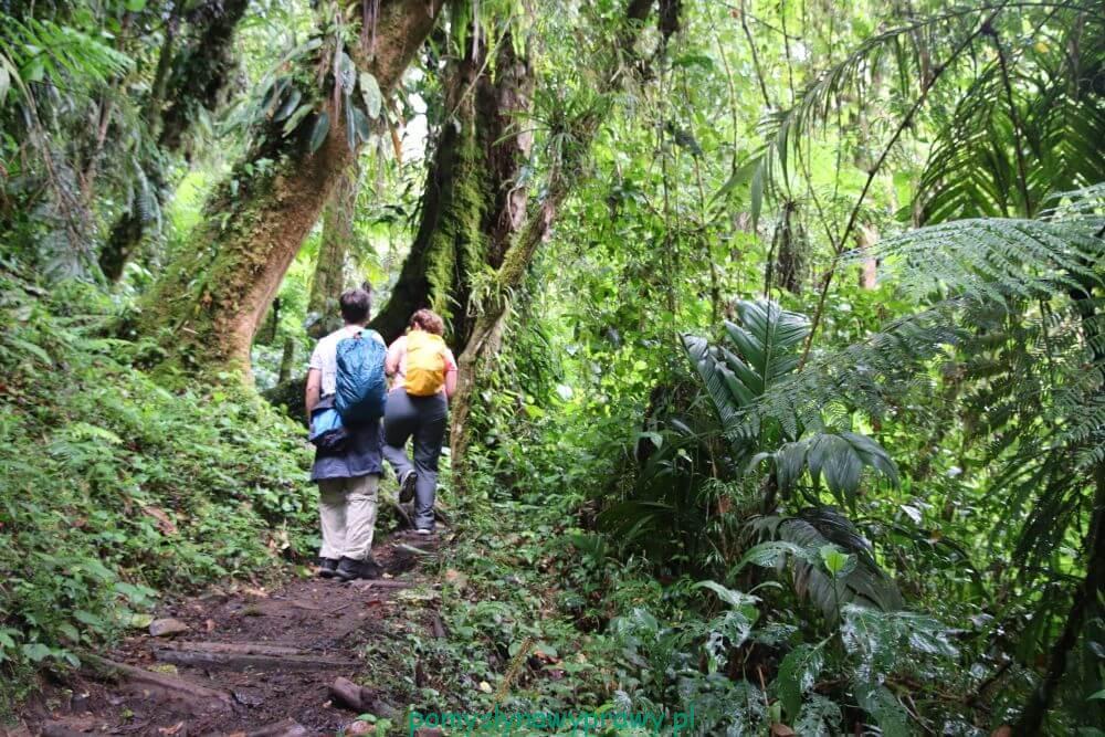 Panama Boquete Tres Cascadas