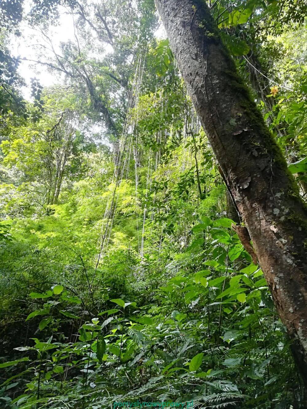 Panama Boquete Pipeline Trail