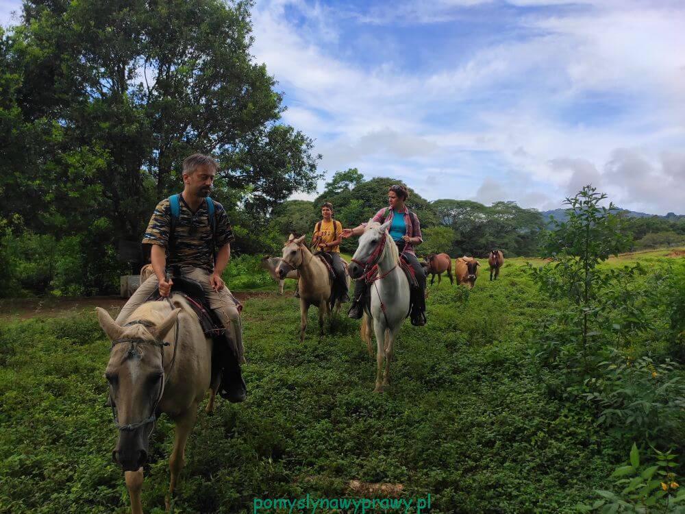 Panama Boquete konie