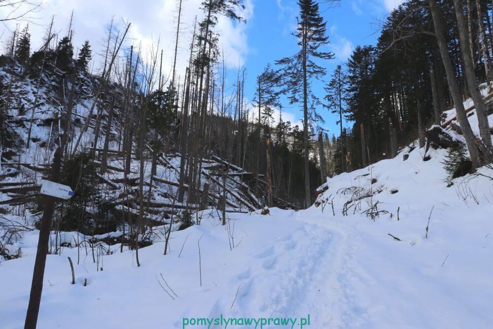 szlak na Halę Stoły