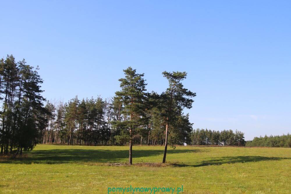 Płociczno – Wigierska Kolejka Wąskotorowa
