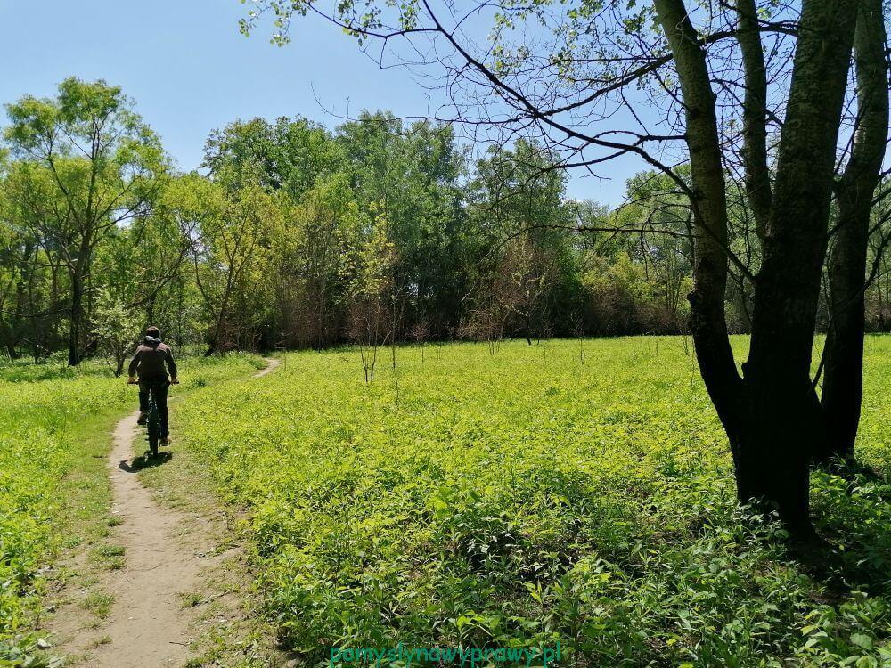 Rezerwat Przyrody Ławice Kiełpińskie