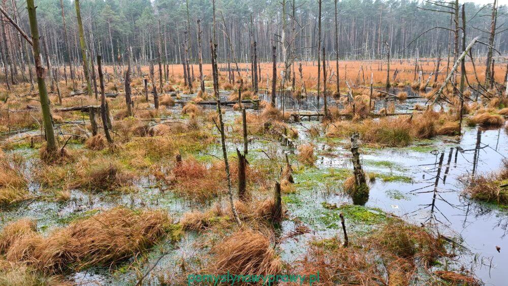 Rezerwat Przyrody Bagno Bocianowskie i Gołe Bagno