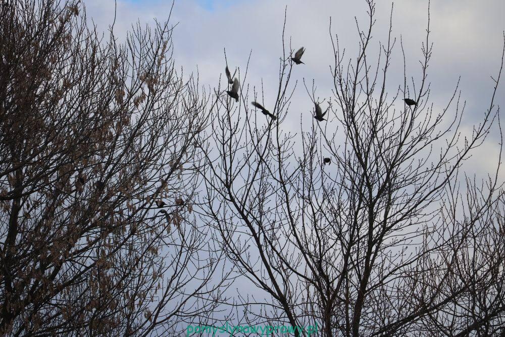 ujście wkry ptaki