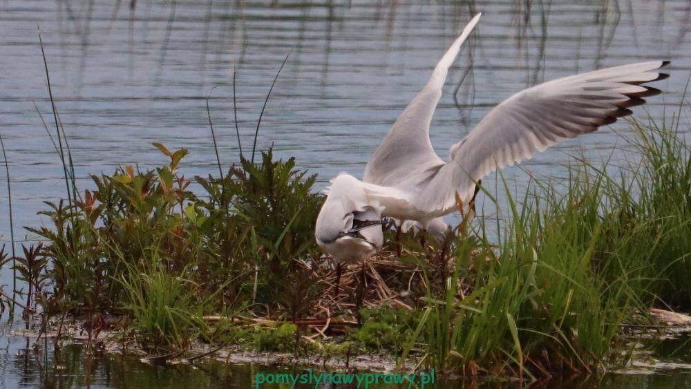 Poleski Park Narodowy Jezioro Moszne